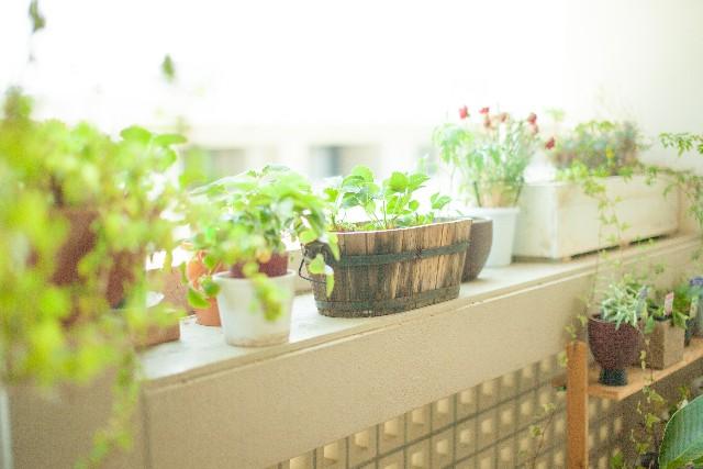 自宅に飾れる観葉植物