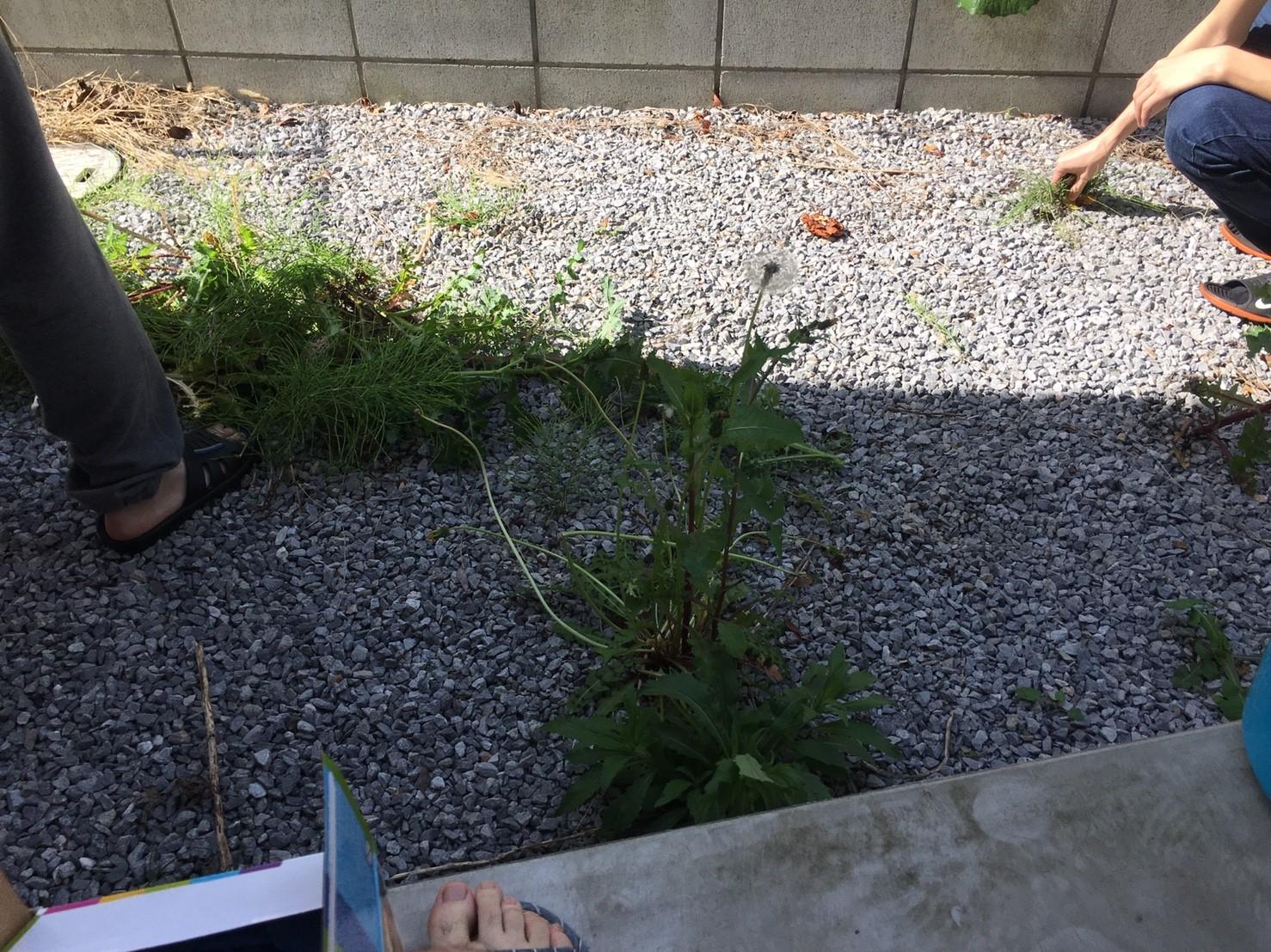 株式会社たろろぐの庭