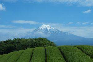 静岡の茶畑と富士山
